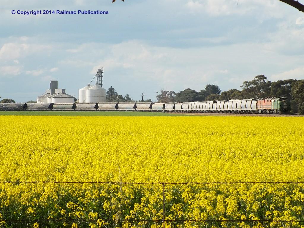 (SM 14-8-5174) GM40, GM47, CLP8 at Mallala with a grain train, 14th August 2014